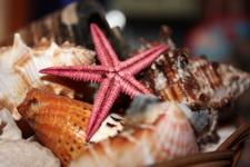 (30.06.2013 © ATola) Сувениры с Крита - Набор ракушек и морская звезда