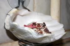 (30.06.2013 © ATola) Сувениры с Крита - Мыльница из большой ракушки