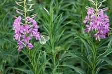 (20.07.2013 © ATola) Природный парк - Оленьи ручьи