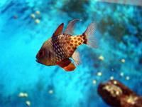 (16.02.2013 © ATola) Екатеринбуржский зоопарк - Рыбы в маленьком аквариуме