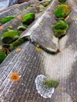 (15.11.2014 © ATola) Мхи и лишайники на крыше - Красивое с телефона