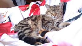 (15.11.2014 © ATola) Кошка Муська - Красивое с телефона