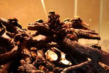 (16.02.2013 © ATola) Екатеринбуржский зоопарк - Бронзовки, только не наши