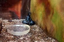 (16.02.2013 © ATola) Екатеринбуржский зоопарк - Скорпион в углу