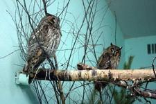 (16.02.2013 © ATola) Екатеринбуржский зоопарк - Совы спят