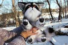 (29.11.2020 handmade, toys) Кошка-енот из далекого космоса - Реалистичная игрушка натюр, фэнтези