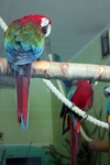(16.02.2013 © ATola) Екатеринбуржский зоопарк - Попугаи Ара