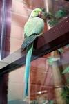 (16.02.2013 © ATola) Екатеринбуржский зоопарк - Попугая на стекле