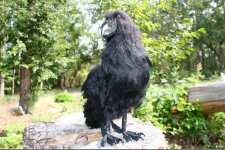 (24.09.2021 handmade, toys) Большой черный ворон - Реалистичная игрушка натюр, Тедди Зверята