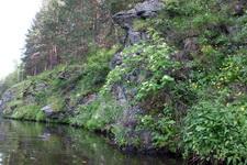 (12.06.2013 © ATola) Прогулка по Исети - Скала и рябина