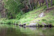 (12.06.2013 © ATola) Прогулка по Исети - Камень на берегу
